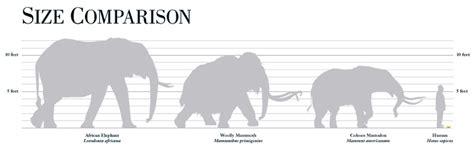 image elephant family size chartjpg dinopedia