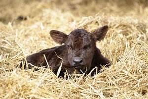 Animal Industry News Update - December 2012