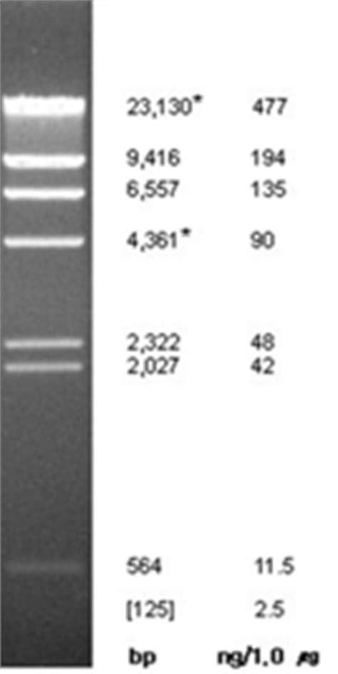 Bioneer Pacific - Lambda DNA / Hind III Marker
