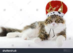 cing cat cat king stock photo 72901192