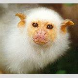 White Baby Arctic Fox | 443 x 400 jpeg 20kB