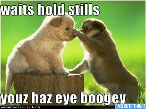 Cutest Animal Memes - animal jokes page 40 zoomumba