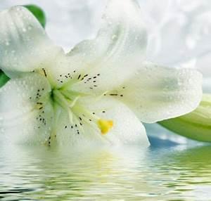 Fleur De Lys Plante : fleur de lys id es de d coration avec cette jolie plante ~ Melissatoandfro.com Idées de Décoration