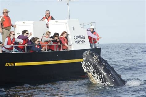 Reviews On Bulls Bay Boats by Captain Wayne S Marine Excursions Bay Bulls Newfoundland