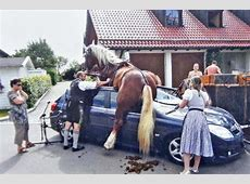 Aschheim Irrer KutschenUnfall Pferd springt auf