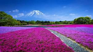 Most Beautiful Nature Wallpapers HD Pictures – HD ...