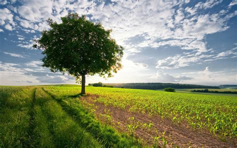 landscaping trees pictures landscape photos with trees www imgkid com the image kid has it