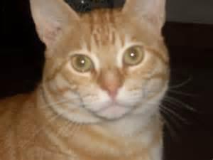 my cat is file tony my cat jpg