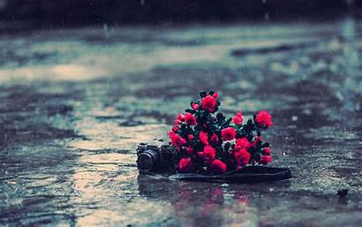 Rain Flowers Camera Wet Desktop Macro Wallpapers