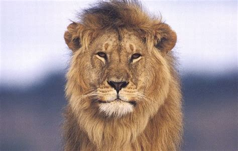 animales salvajes lista informacion imagenes
