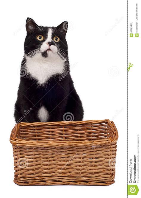 Black Cat Sitting Near Basket Stock Photo  Image 62689425
