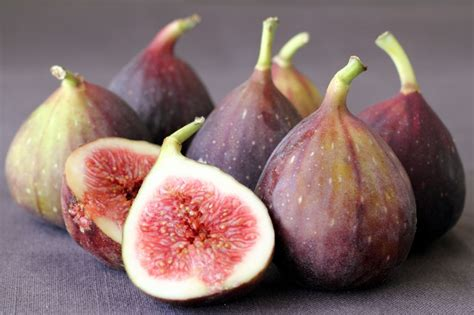 fig season under the fig tree the times of israel