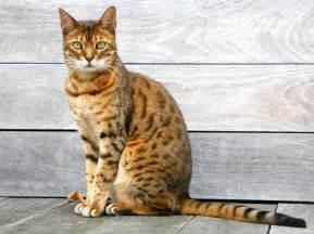 cat sitting cat sitting clipart