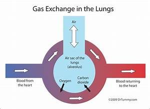 6 4 Gas Exchange