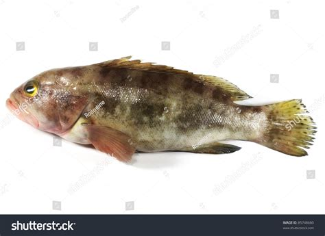 grouper fish cooking expensive isolated shutterstock
