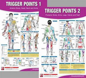 Trigger Points Massage Therapy Fitness Anatomy 2