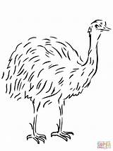 Emu Template Coloring Bird Flightless Australian Animal Pages Drawing Clipart Templates Printable Sheet Sketch Ausmalbild Vogel Birds Supercoloring Kangaroo Tiere sketch template