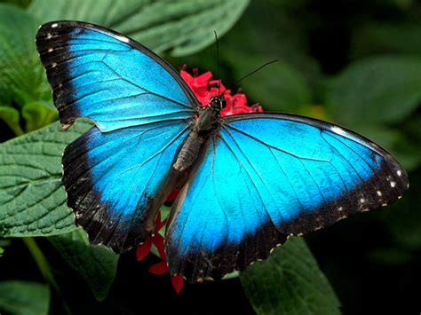 Beautiful Butterfly Hd Wallpapers Top Butterfly Images