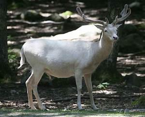 White Elk Quote... Elk Animal Quotes