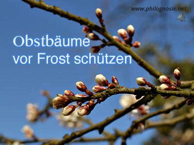 obstbäume vor schützen obstb 228 ume gegen fr 252 hjahrsfrost sch 252 tzen philognosie