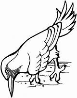 Woodpecker Coloring Pages Printable Sheet Animals Preschool Swan sketch template