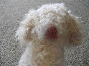 Cyst on my dog - Photos attached - any advice?