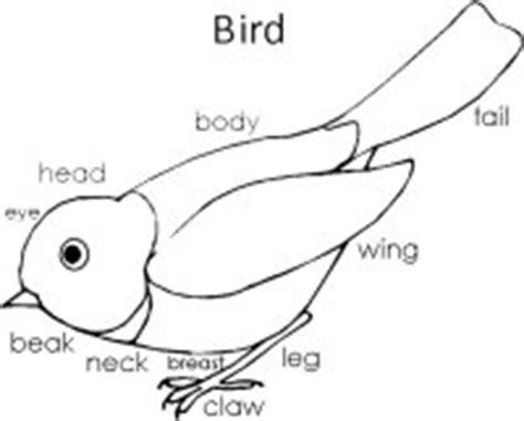bird theme  preschool  printable pages