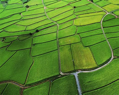mb wallpaper rice paddy field nature papersco