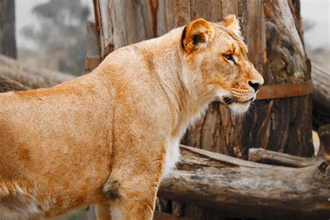 Free Images  Animal, Profile, Wildlife, Wild, Zoo, Fur