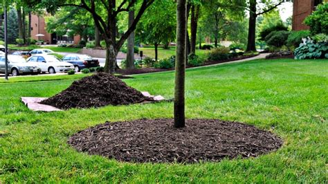 how to mulch grass ways of caring for garden trees during winter ideas 4 homes