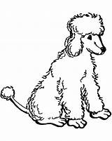 Poodle Coloring Pages Standard Poodles Printable Template Sheets Colouring Print Drawn Nova Novas Clip Getcolorings Library Clipart sketch template
