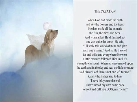 creation dog poems dog signs dogs