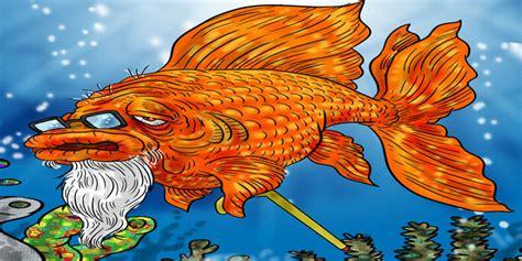 goldfish life span  long  goldfish  oldest