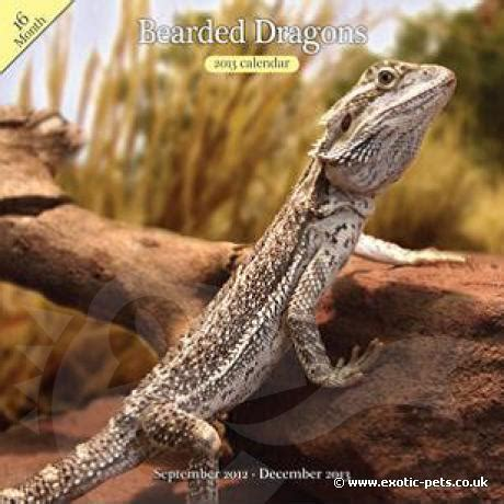 bearded dragon heat l wattage bearded dragon wall calendar bearded dragon wall calendar