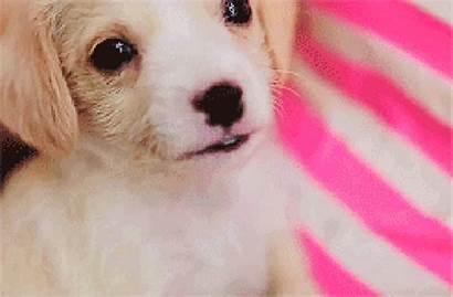 Puppy Sleepy Yawn Struggle Understand Puppies Morning