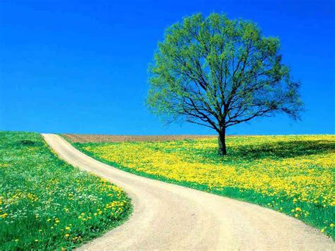 wallpapers lonely tree photography wallpapers