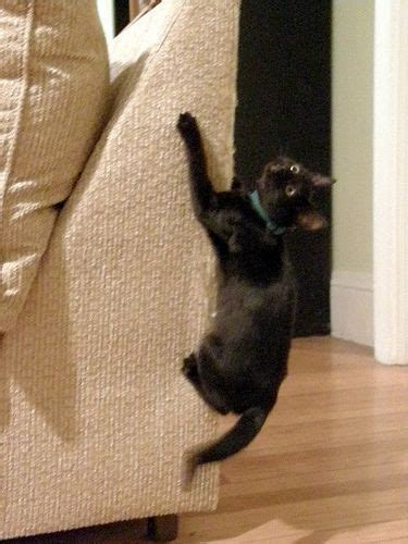 Stop Cat From Scratching Furniture by How To Stop A Cat From Clawing Furniture