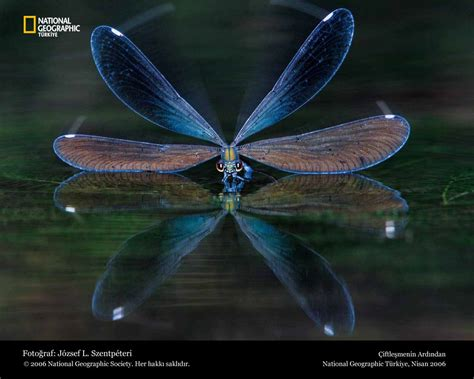 Animated Dragonfly Wallpaper - hd wallpapers dragonfly wallpapers
