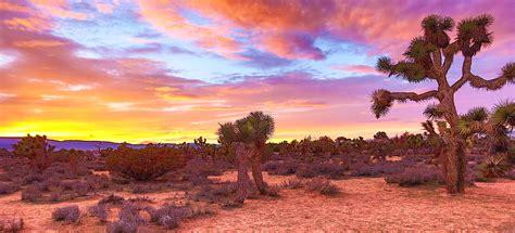 Cactus on desert HD wallpaper | Wallpaper Flare