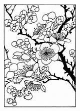 Cherry Blossom Coloring Tree Clipart Clip Patterns sketch template