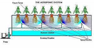 Why Citycrop Uses Hydroponics