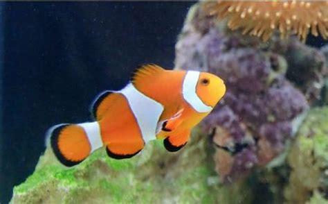 types  saltwater aquarium fish  pets central