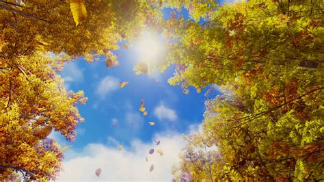 Fall Backgrounds Realistic by Motion Through Golden Autumn Leaves Falling From Trees In