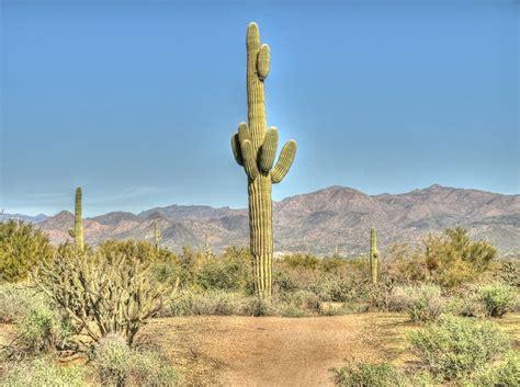 indoor vertical garden saguaro cactus facts balcony garden web