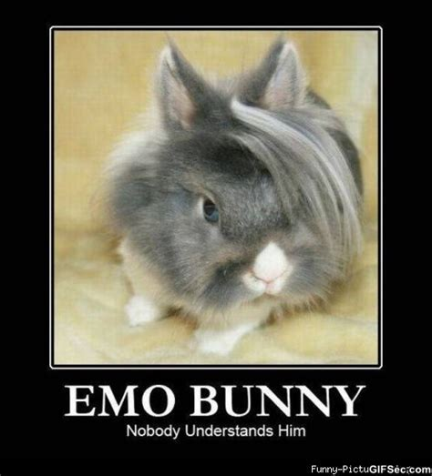Bunny Memes - funny pictures 36