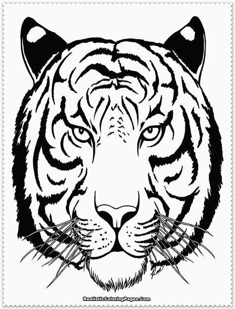 Coloring Tiger by Realistic Tiger Coloring Pages Realistic Coloring Pages