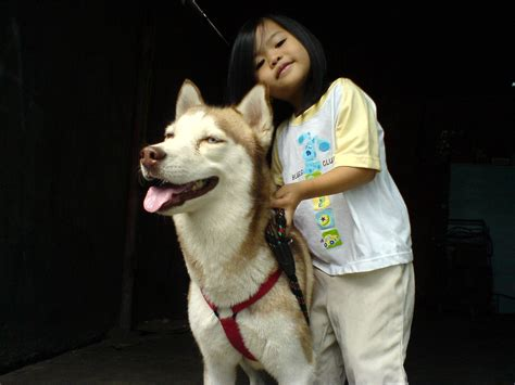 Most Effective Ways To Calm Your Siberian Husky Dog Reference