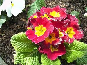Was Sind Frühlingsblumen : dieses foto zeigt die fr hlingsblumen der stadt saarbr cken das foto habe ich am in ~ Whattoseeinmadrid.com Haus und Dekorationen