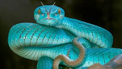 Snake Viper Sky Wallpapers Animals Eyes Background