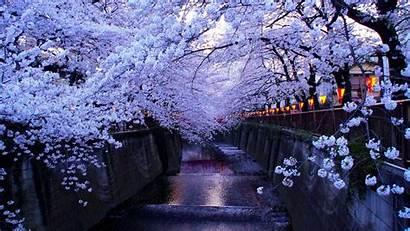Blossom Cherry Anime Wallpapers Desktop Spring Backgrounds